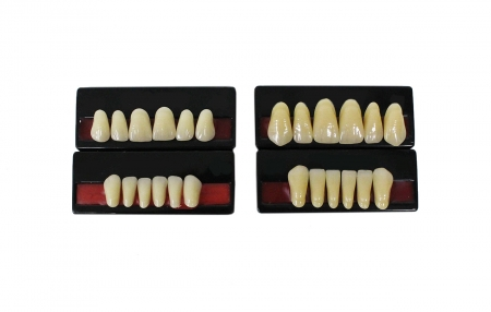 Artificial Teeth Sets